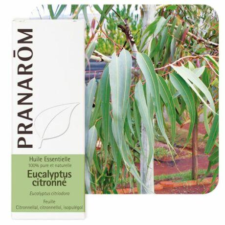 Vietnámi Eukaliptusz Illóolaj - Eucalyptus citriodora | PRANAROM