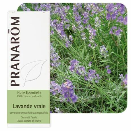 Orvosi levendula illóolaj - Lavandula-angustifolia | Pranarom
