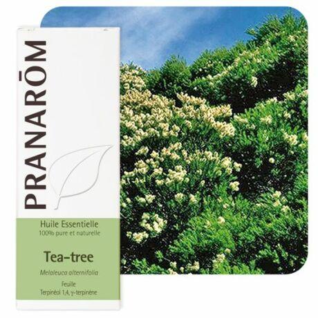 Teafa illóolaj - Melaleuca alternifolia | PRANAROM